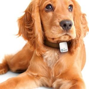 71jLCduvvOL. SL1500  300x300 - NEU: GPS-Geräte für Hunde im Test & Vergleich