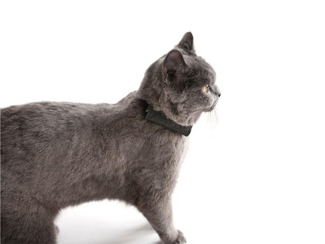 Kritik Wo Ist Lilly Katze Im Test Gps F 252 R Katzen