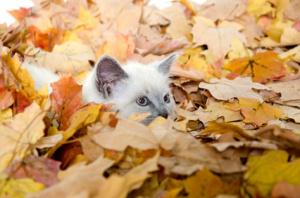 Cute kitten hiding in leaves