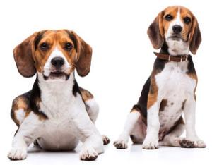 Verhalten von Hunden deuten & verstehen: Hundeverhalten