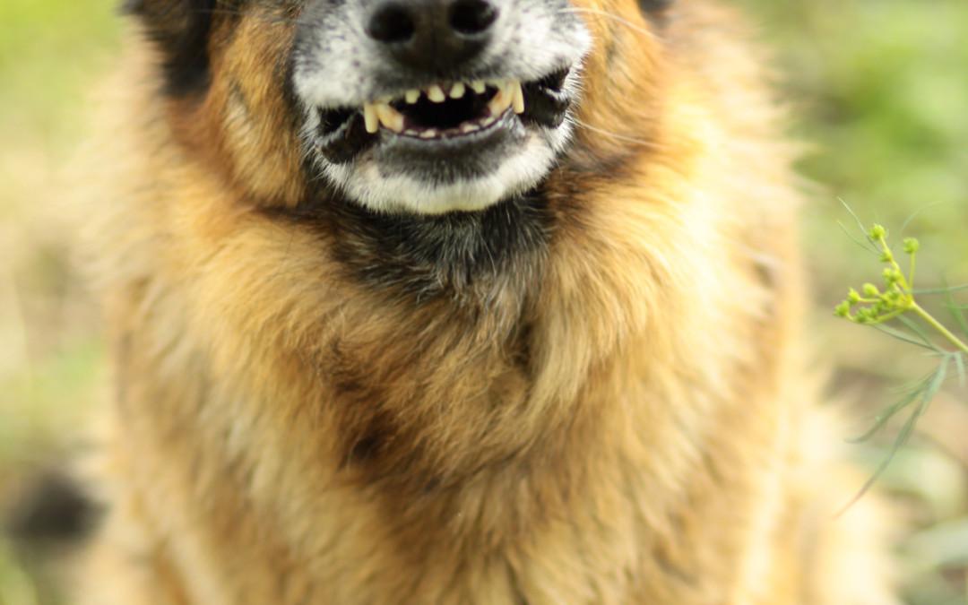 Ängstlicher Hund: Was tun? Angsthunde-Ratgeber & Tipps