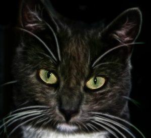 Leichte GPS Tracker für Katzen e1528824164875 300x275 - NEU: GPS-Geräte für Katzen im Test & Vergleich