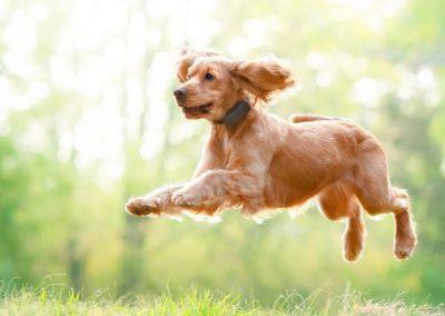 dog-tracker-honey