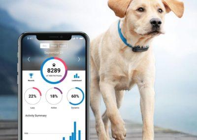 tractive-dog-activity-monitoring