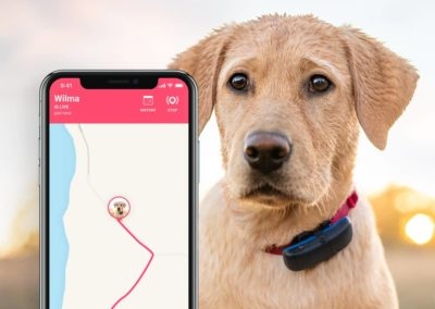 tractive-dog-live-tracking